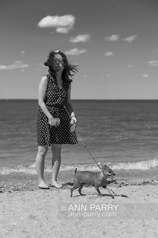 Sands Point, New York, U.S. - July 5, 2014 - During July 4th holiday weekend, many people with their dogs visit the Shoreline at Sands Point Preserve on the Gold Coast along Long Island Sound, when sunny warm weather arrives after a July 4th with many events canceled due to rain.