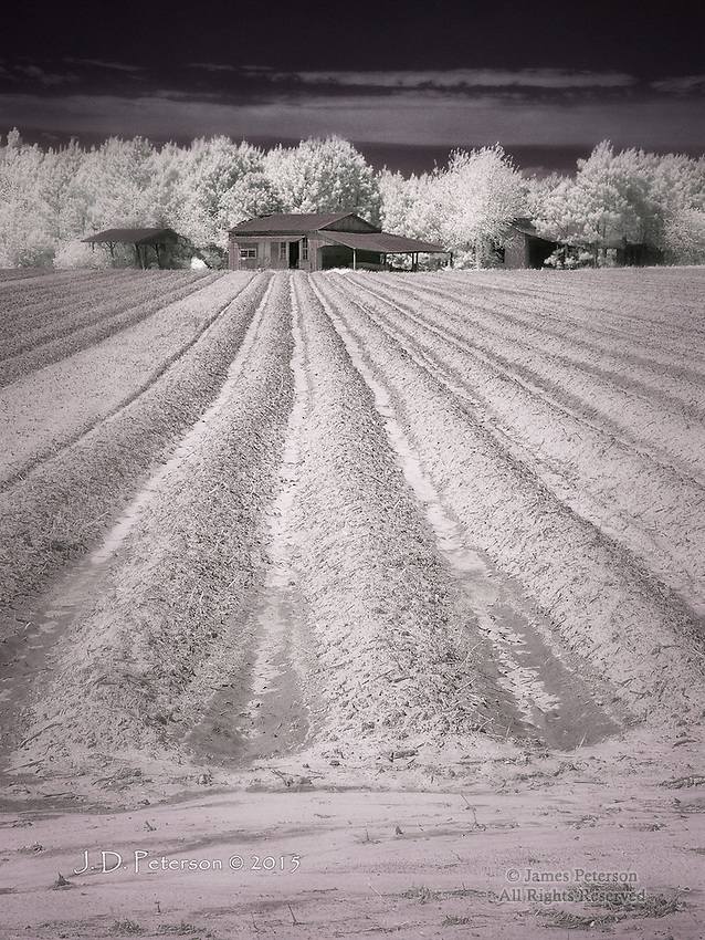Hard Living - Farmstead near Warsaw, NC (Infrared)