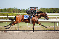#69Fasig-Tipton Florida Sale,Under Tack Show. Palm Meadows Florida 03-23-2012 Arron Haggart/Eclipse Sportswire.