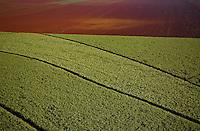 Sugarcane plantation next to plowed land near Ribeirao Preto, Sao Paulo State, Brazil.