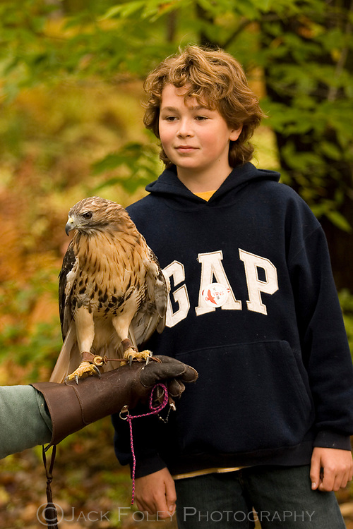 Red tailed hawk, being held by a scientist, with a young boy watching.