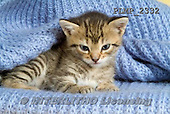 Marek, ANIMALS, REALISTISCHE TIERE, ANIMALES REALISTICOS, cats, photos+++++,PLMP2332,#a#