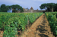 Europe/France/Aquitaine/33/Gironde/Sauternais/Sauternes : Le chateau d'Yquem - Le chateau et les vignes [Non destiné à un usage publicitaire - Not intended for an advertising use]