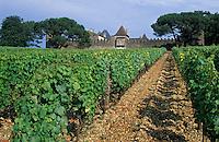 Europe/France/Aquitaine/33/Gironde/Sauternais/Sauternes: Le chateau d'Yquem - Le chateau et les vignes [Non destiné à un usage publicitaire - Not intended for an advertising use]