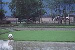 China, a farmer in a rice field, Guangxi Zhuang Autonomous Region