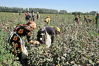 Young labourers picking cotton in the field