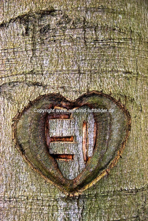 Herz: DEUTSCHLAND, GERMANY, HAMBURG 12.11.2007: Baum, Baumstamm, Beschaedigt, Buche, Laubbaum, Buchstaben, Erinnerung, Herbst, Herz, Holz, Information, Lieben, Liebesbeweis, Natur, Niemand, Pflanzen, EU, Europaeische Union, Verwachsen, Zugewachsen, Initialen,  Schnitzen, Symbolik, Zerstoerung, Aufwind-Luftbilder .c o p y r i g h t : A U F W I N D - L U F T B I L D E R . de.G e r t r u d - B a e u m e r - S t i e g  1 0 2,  .2 1 0 3 5  H a m b u r g ,  G e r m a n y.P h o n e  + 4 9  (0) 1 7 1 - 6 8 6 6 0 6 9 .E m a i l      H w e i 1 @ a o l . c o m.w w w . a u f w i n d - l u f t b i l d e r . d e.K o n t o : P o s t b a n k    H a m b u r g .B l z : 2 0 0 1 0 0 2 0  .K o n t o : 5 8 3 6 5 7 2 0 9.C  o p y r i g h t   n u r   f u e r   j o u r n a l i s t i s c h  Z w e c k e, keine  P e r s o e n  l i c h ke i t s r e c h t e   v o r  h a n d e n,  V e r o e f f e n t l i c h u n g  n u r    m i t  H o n o r a  n a c h  MFM, N a m e n s n e n n u n g und B e l e g e x e m p l a r !...