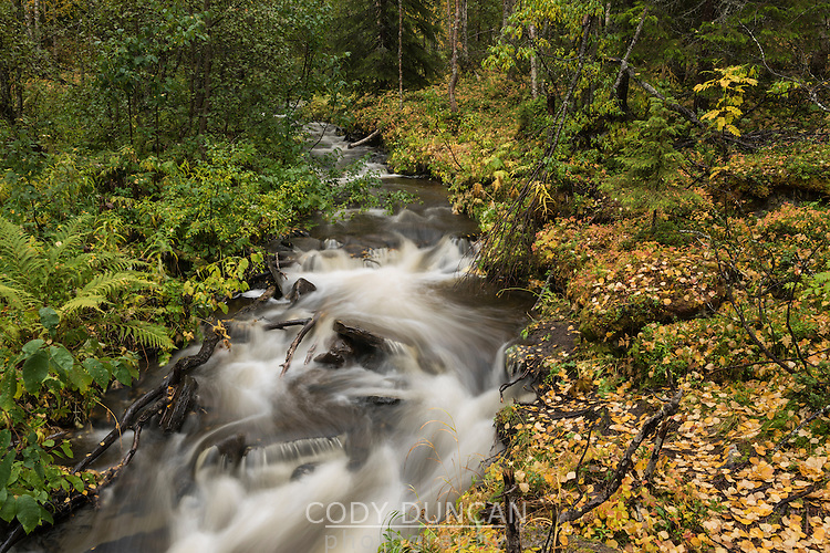 Small mountain river in Vindelfjällen nature reserve, Kungsleden trail, Lapland, Sweden