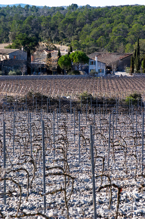 Domaine de Mas de Martin, St Bauzille de Montmel. Gres de Montpellier. Languedoc. The villa. Vines trained in Cordon royat pruning. Young vines. Terroir soil. The main building. In the vineyard. France. Europe. Soil with stones rocks. Calcareous limestone.