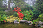 Seattle, Washington:<br /> Kubota Gardens city park. Fall colors and fog