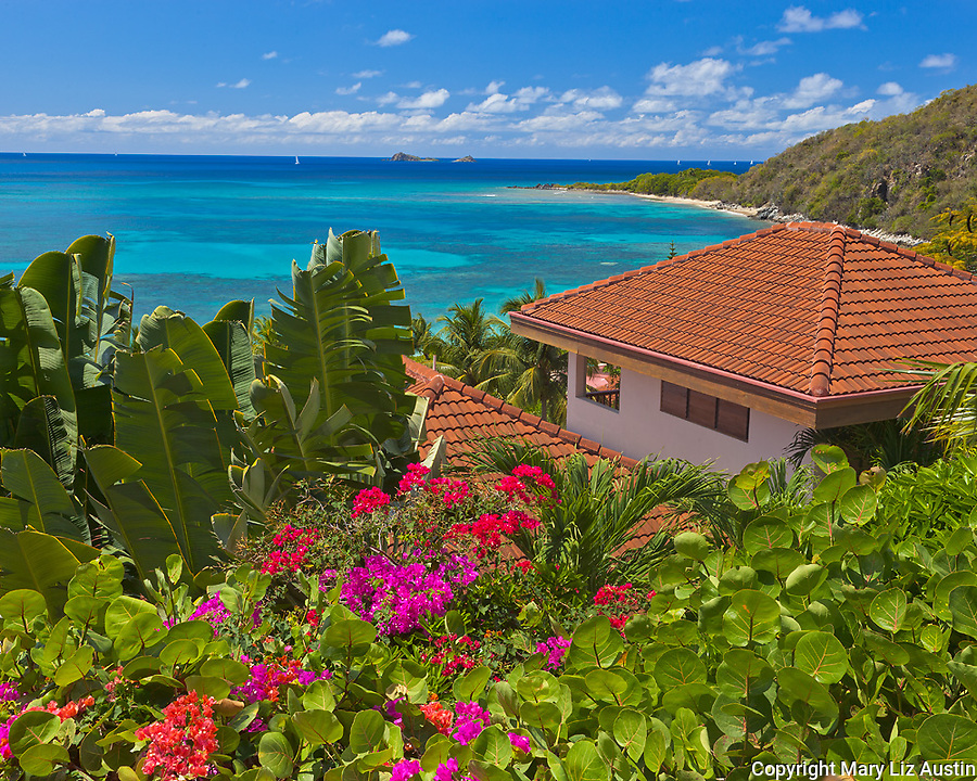 Virgin Gorda, British Virgin Islands, Caribbean <br /> A hedge of bougainvillea blooms at an overlook above Mahoe Bay