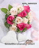 Alfredo, FLOWERS, BLUMEN, FLORES, photos+++++,BRTOLMN48529,#f#, EVERYDAY ,rose,roses