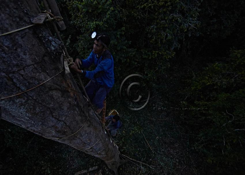 Hamsah and his brother Boni in the middle of climbing a lalau named Datu Nahar, in memory of a relative who died from a fall from the tree. ///Hamsah et son frère Boni en pleine ascension d'un lalau nommé Datu Nahar, en souvenir d'un parent mort d'une chute à son pied.