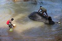 washing elephant  at the Elephant camp