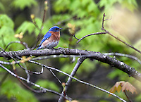 Birding Week
