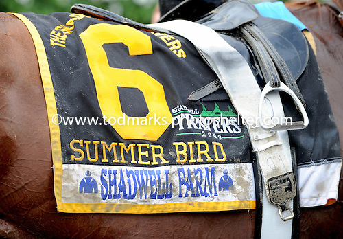Summer Bird wins the $1 million Travers Stakes at Saratoga on Aug. 29, 2009.