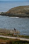 Ile Kangourou au sud d'Adélaïde..Admiral Arch à la pointe du Couedic, au sud est de l'île.Territoire de l'otarie à fourrure de Nouvelle-Zélande (New Zealand fur seal).