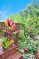 Adorable piggy pot container with Canna, annual calibrachoa flowers, coleus, on wooden deck near stps, overlooking garden with fruit tree peaches (Prunus), and lots of flowers and foliage plants. Blue sky in distance on summer day.