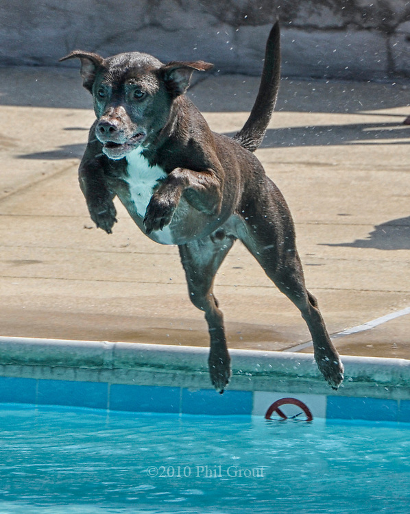 """Rusty shows off his champion form and flies through the air, on his way to snagging a tennis ball before the """"doggy dip"""" begins."""