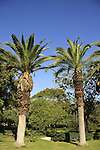 Israel, Southern Coastal plain. Mikveh Israel Botanical Garden