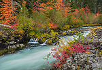 Rogue River National Forest, OR: Autumn colors of dogwoods and willows on the basalt banks of the Rogue River on the Rogue-Umpqua Scenic Byway