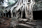 A temple is sinking into the earth under the weight of a massive tree at Ta Prohm in Angkor Thom, Cambodia. June 7, 2013.