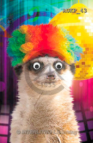 Samantha, ANIMALS, REALISTISCHE TIERE, ANIMALES REALISTICOS, funny, photos+++++Meerkat Party 3 master,AUKP43,#a#