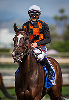 ARCADIA, CA - APRIL 08: Paradise Woods #3, ridden by Flavien Prat win the Santa Anita Oaks at Santa Anita Park on April 08, 2017 in Arcadia, California.  (Photo by Zoe Metz/Eclipse Sportswire/Getty Images)