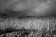 Image Ref: YR023<br /> Location: Lake Mountain<br /> Date of Shot: 24 Nov 2013