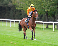 Second Slip ridden by George Wood goes down to the start of The British EBF Novice Stakes  during Horse Racing at Salisbury Racecourse on 11th September 2020