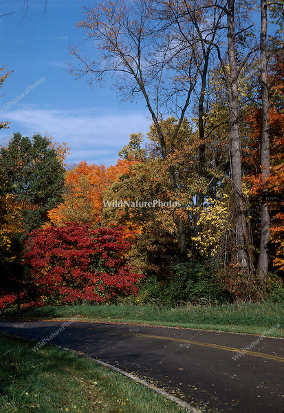 Fall Color and Paved Road