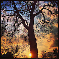 The late afternoon sun hides behind a tree on Johnson Street in the Germantown section of Philadelphia, February 3, 2013.
