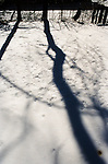 Winter scene outdoors with twigs in snow and long shadows