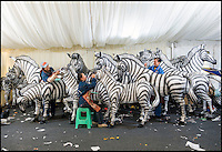BNPS.co.uk (01202 558833)<br /> Pic: PhilYeomans/BNPS<br /> <br /> Skilled artists from Zigong put the finishing touches to a herd of Zebra.<br /> <br /> The largest Chinese 'Festival of Light' seen in Europe is taking shape at the Longleat House in Wiltshire - A small army of over 50 skillled workers have flown in from the remote village of Zigong in central China to create the stunning spectacle.<br /> <br /> Among the different scenes are a 20-metre tall Chinese temple, a 70-metre-long dragon, created using more than 10,000 porcelain cups, bowls, plates and dishes, and the mythical qilin &ndash; a chimerical hooved creature with the head of a lion &ndash; featuring more than 30,000 glass phials filled with coloured liquid.<br /> <br /> Massive traditional Chinese masks are also featured and there is also a bamboo forest which is home to a family of life-size pandas, giant elephants, zebras, lions and deer as well as giant lotus flowers floating on the lake.<br /> <br /> Filled with thousands of LED lights and handmade by a team of 50 highly-skilled craftsmen from Zigong in China's Sichuan province, the lanterns recreate a magical world of myths and legends.<br /> <br /> Set amid the beautiful backdrop of the landscaped grounds and gardens surrounding Longleat House, the lit structures also spill out on to Half Mile Lake to create a stunning and enchanting experience for visitors.<br /> <br /> It&rsquo;s the first time a festival of this size has taken place in the UK and the Chinese team behind the spectacular event believe its size and complexity make it unique throughout Europe.