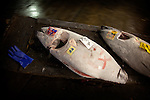 Tokyo, 1st of March 2010 - Tuna at Tsukiji wholesale fish market, biggest fish market in the world. 5:55 a.m, frozen tunas taken away from the auction area by a buyer.