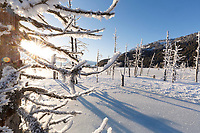 Winter landscape of hoarfrost covered dead trees with the sun peaking through branches and the Chugach & Kenai Mountains in the background  in Southcentral, Alaska.  <br /> <br /> <br /> <br /> Photo by Jeff Schultz/SchultzPhoto.com  (C) 2017  ALL RIGHTS RESVERVED