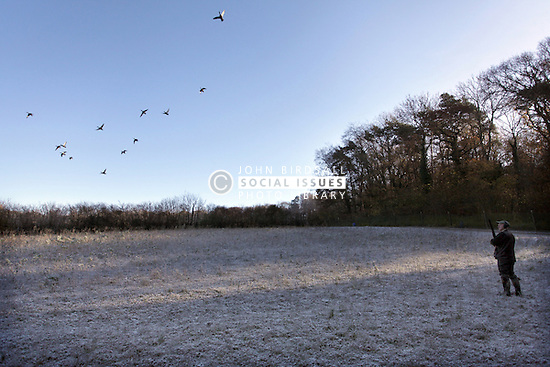 Game shooting South West England, Ducks flighting