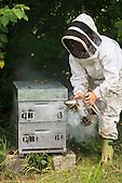 Christelle Appaganou (apicultrice à Bourail) en train d'enfumer la ruche avant ouverture
