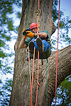 Times Photographer Bob Gathany takes photos while hanging out in the tree.  Recreational tree climbing class in Atlanta, GA taught by Tree Climbers International.  Photo by Ken Hawkins.