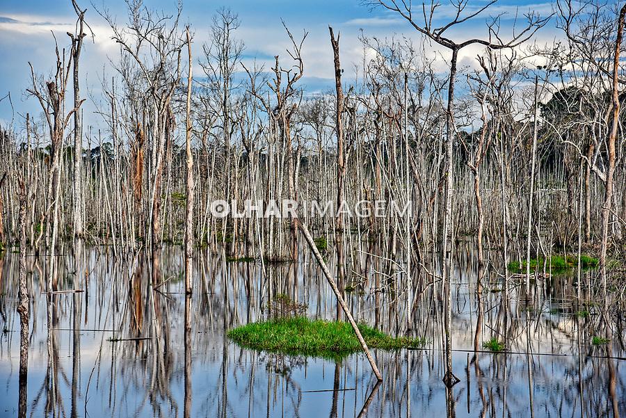 Arvores mortas em area inundada pela construcao da UHE Usina Hidreletrica de Belo Monte, Vitoria do Xingu. Para. 2017. Foto Luciana Whitaker