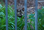 One of the Rivertown Cats waits for dinnertime in downtown Antioch, California on Saturday, March 22, 2014.  Photo/Victoria Sheridan