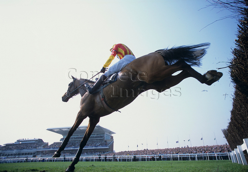 Jockey on horse clears thicket fence on his way to finish line