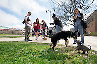 Puppy play on the Drill Field.<br />  (photo by Megan Bean / &copy; Mississippi State University)