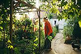 Hermine Jinga-Roth schneidet morgens die Blumen in ihrem Garten. Europa, Rumaenien, Rusciori den 27. Juli 2015