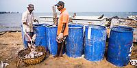 Panoramic photo of fishermen in Negombo fish market (Lellama fish market), Negombo, West Coast of Sri Lanka, Asia. This is a panoramic photo of fishermen in Negombo fish market (Lellama fish market), Negombo, West Coast of Sri Lanka, Asia.
