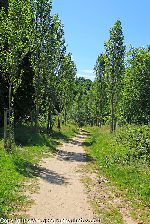 Avenue of poplar trees on Sissinghurst castle estate, Kent, England, UK