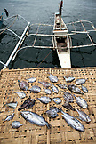 PHILIPPINES, Palawan, Puerto Princesa, fish drying at the Liberty Fishing Village