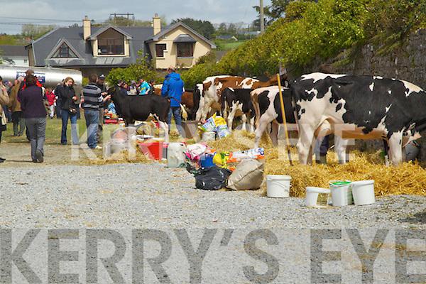 The Kingdom County Fair on Sunday