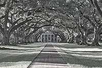 Early morning at Oak Alley in almost black and white. The sun is just filtering through theses 300 year old trees on the plantation. These wonderful old oak trees were planted before the sugar plantation existed but no one knows who planted them. The house was positioned to enhance the trees presence on the plantation and they seem to create this wonderful canopy over the house and sidewalk.