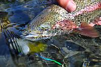Alaska rainbow trout fly fishing.